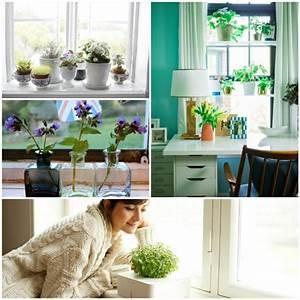 Fensterbank Deko Mit Pflanzen Die Einen Kleinen Garten