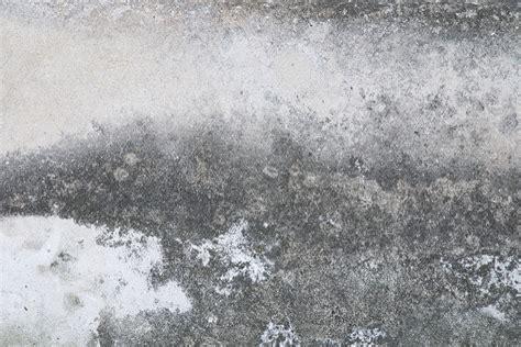 mold grow  concrete polygon