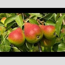 How To Grow Fruit Trees Faster Youtube