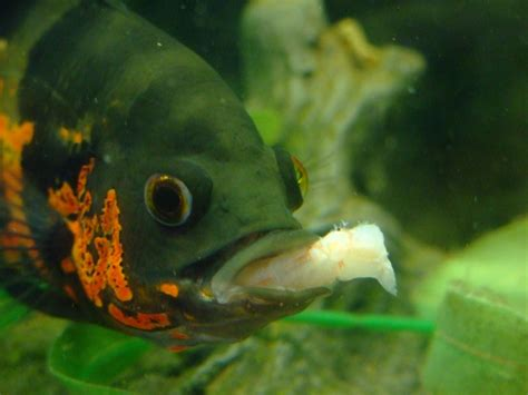 Different Types Of Bottom Feeder Fish