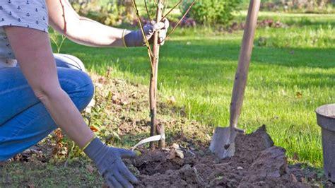 Pflanzen Im Oktober by Der Nutzgarten Im Oktober Tipps Und Tricks Vom G 228 Rtner