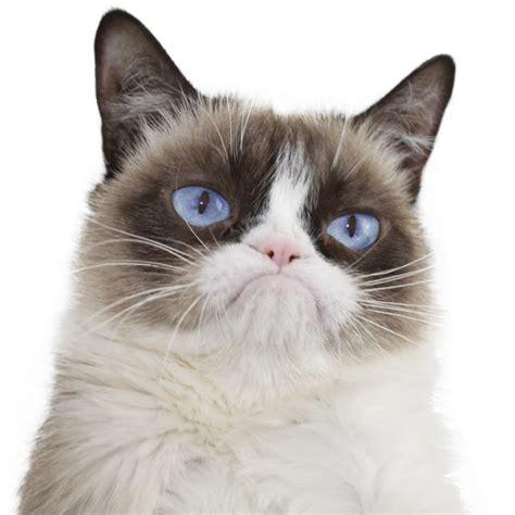 Real Grumpy Cat Youtube