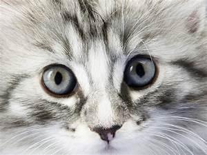 so cute cat ima... Cute Cats