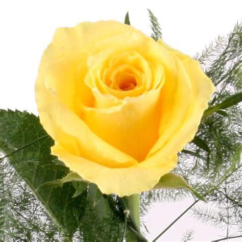 rose gelb blumen  deutschlandweit bestellen mit