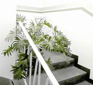 Pflanzen Im Treppenhaus : startseite hotel sechzehn das 3 sterne hotel in leverkusen opladen ~ Orissabook.com Haus und Dekorationen