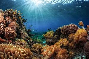 15 Activities for Kids about the Ocean Ecosystem - Nature ...