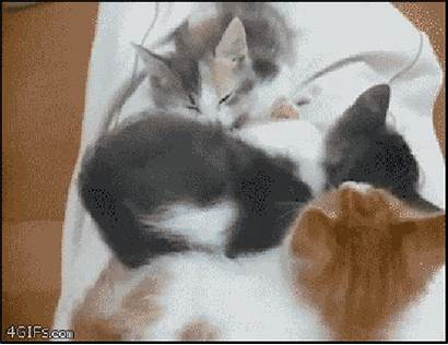 Cat Gifs Week Arms Too Kittens Cats