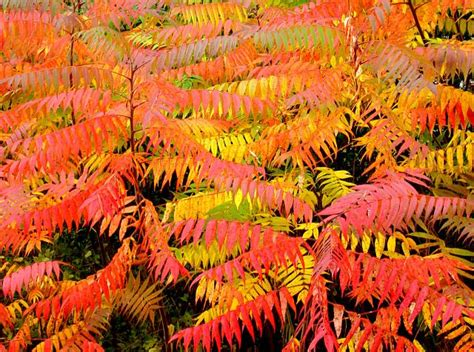 fall color top trees and shrubs marsh brothers