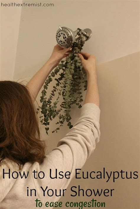 Shower For Asthma by How To Use Eucalyptus In The Shower To Ease Congestion