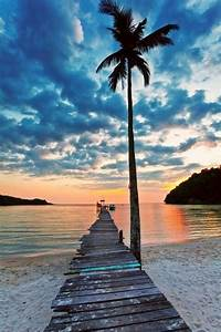 Beach√, Sunset√, Palm Tree√   Oak Trees /Palm Trees ...