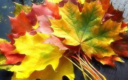 Foliage Colorful Fall Autumn Nature Devices Smart