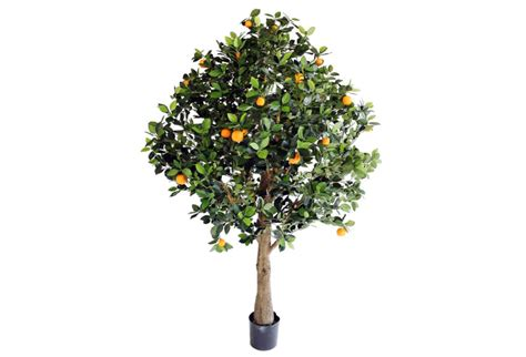 pianta fiori arancio pianta arancio