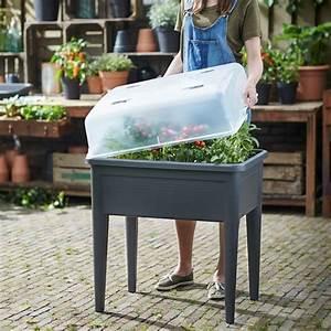 Carré Potager Gamm Vert : carr potager avec cloche elho l76 h65 1 cm noir plantes ~ Dailycaller-alerts.com Idées de Décoration