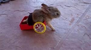 Maison Pour Lapin : une proth se fait maison pour son lapin parapl gique ~ Premium-room.com Idées de Décoration