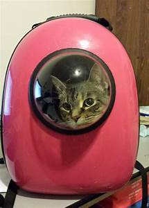Clever Cat-Pack Lets Your Pet Travel Like An Astronaut ...
