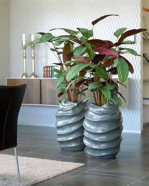 Die Besten 25+ Große Zimmerpflanzen Drinnen Ideen Auf
