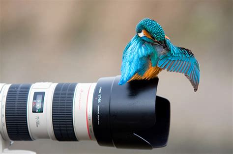 30+ Beautiful Perfectly Timed Animal Photos -DesignBump