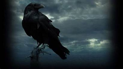 Raven Wallpapers Thrones Eyed Backgrounds Warcraft Three
