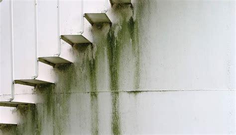 paint exterior water stains zinsser uk