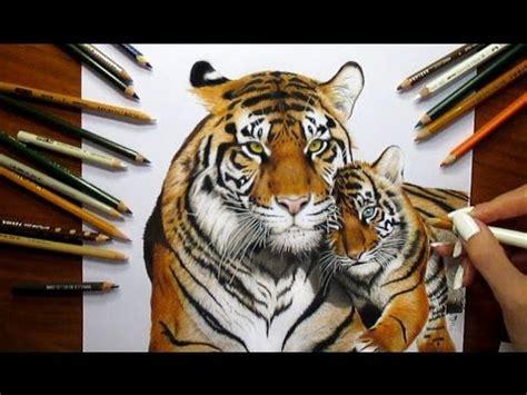 colored pencil drawing tigress  tiger cub speed draw