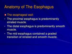 Ppt - Esophageal Motility Disorders Powerpoint Presentation