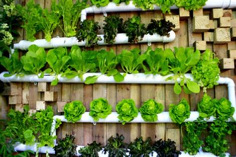 ตามหลักแล้วการทำสวนครัวหรือการทำเกษตรแบบพอเพียงนั้นมุ่งเน้นเรื่องให้เรามีผักที่ปลอดภัยทานทุกวัน ...