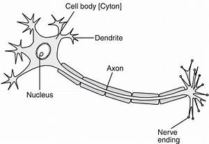 draw the structure of neuron and label cell body and axon With structure of cell part 3 pass science solutions