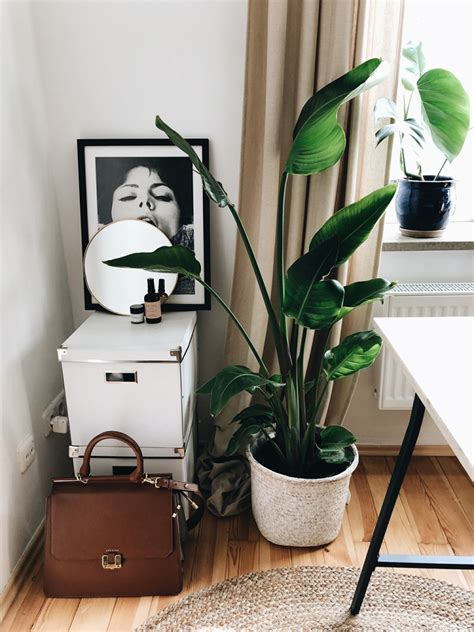 Pflanzen Für Wohnung by Plant Meine 10 Liebsten Pflanzen F 252 R Die Wohnung