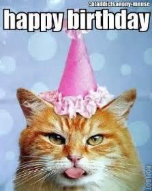 happy birthday cat happy birthday cat happy birthday happy