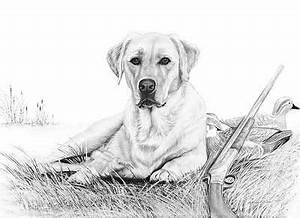 Drawn hunting black labrador - Pencil and in color drawn ...