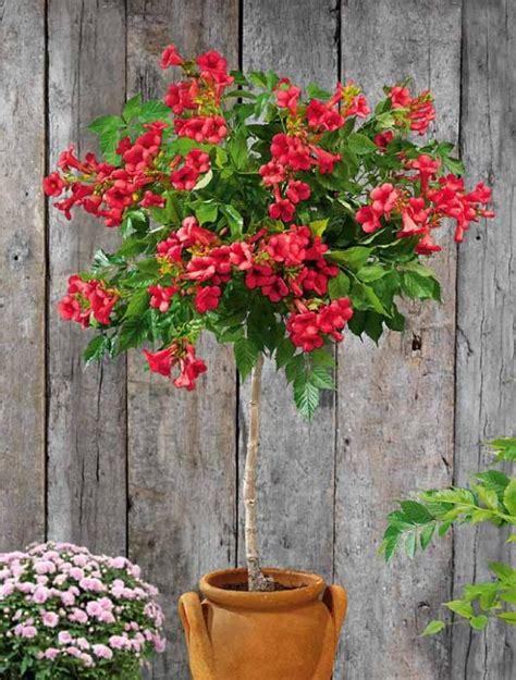 arbuste en pot plein soleil petit arbuste en pot 28 images quel arbuste en pot en plein soleil les bonsa 239 s ces