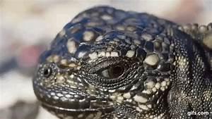 Snake Attack Gif | www.pixshark.com - Images Galleries ...