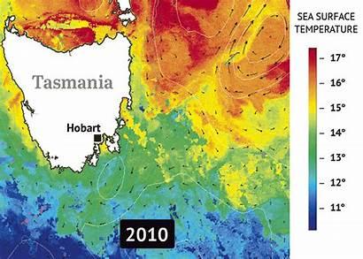 Tasmania Surface Sea Temperatures Marine Integrated Ocean