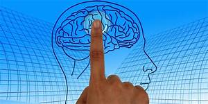 17 Questions To Study For A Brain Anatomy Quiz In Ap