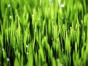 7 Impressive Benefits Of Wheatgrass