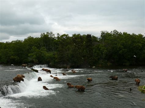 bear katmai cam brooks falls park alaska national bears preserve weather brown keywords before alaskan