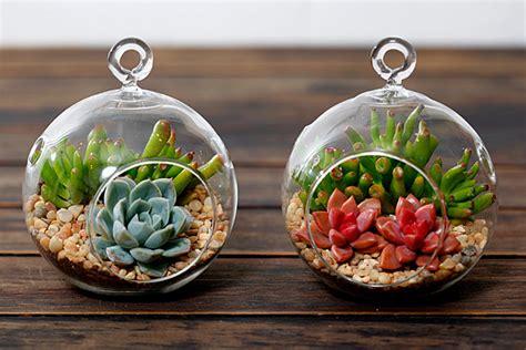 design  build   succulent terrarium  csus greenhouses