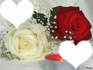 Fleur Rose Et Blanche : bouquet de rose blanche et rouge livraison fleurs discount collegecalvet66 ~ Dallasstarsshop.com Idées de Décoration