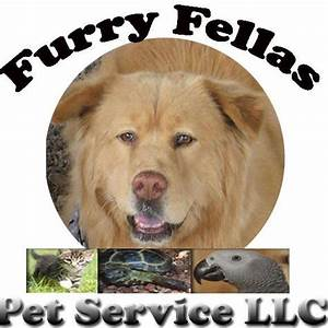 furry fellas dog walking pet sitting service coupons With dog walking services near me
