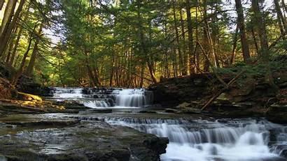 Salt Springs State Park Pennsylvania Desktop Wallpapers