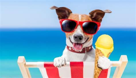 hunde ernaehrung eis kann gesund sein