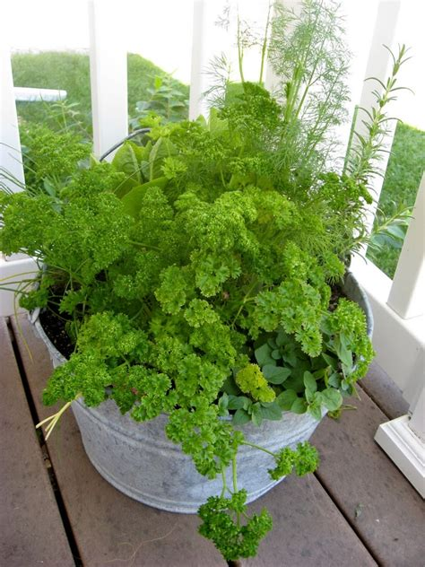 Growing Herbs In Containers  New Nostalgia