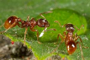 To Stay Alive  Ants Dump Their Dead