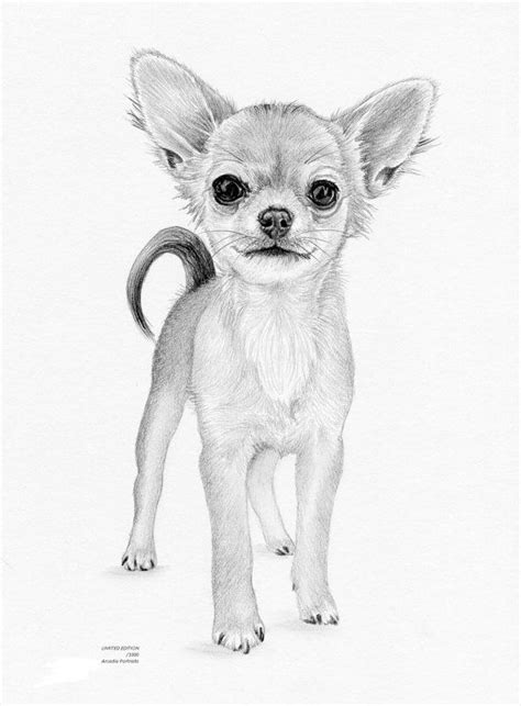 chihuahua puppy dog limited edition art drawing print
