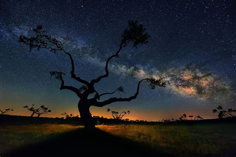 The Milky Way Galaxy Above Trees Salamanca Earth Blog