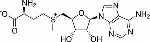 File:S-Adenosyl methionine.png - Wikimedia Commons