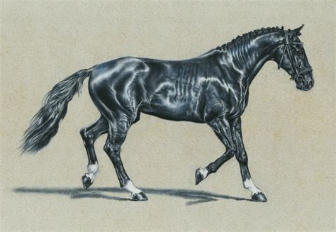 cool horse drawings  inspiration hative