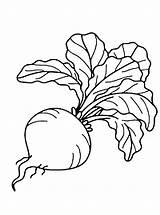 Coloring Beet Pineapple Peach sketch template