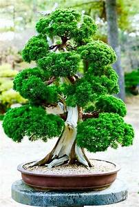Bonsai Tree Care 8 Tips for Beginners - small garden ideas