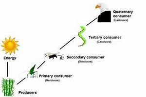 Food Chain Information submited images